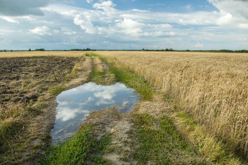 在土路的水坑 免版税库存照片