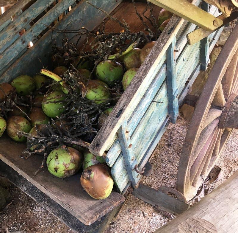 在圣保罗状态巴西的Coconutsin推车Fazenda 库存照片