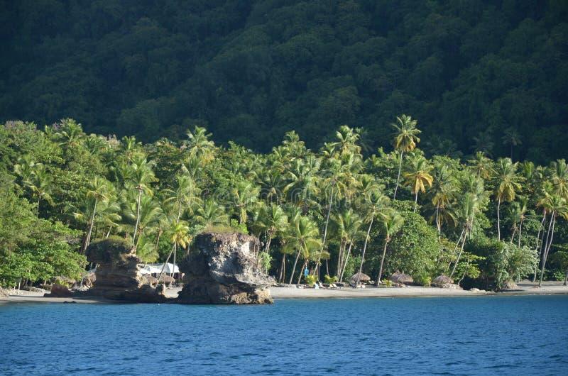 在圣卢西亚附近的加勒比自然梦想海滩棕榈树 免版税图库摄影
