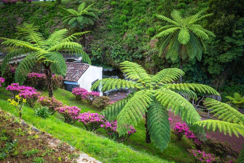 在圣地米格尔海岛,亚速尔群岛上的庭院 它位于中间 图库摄影