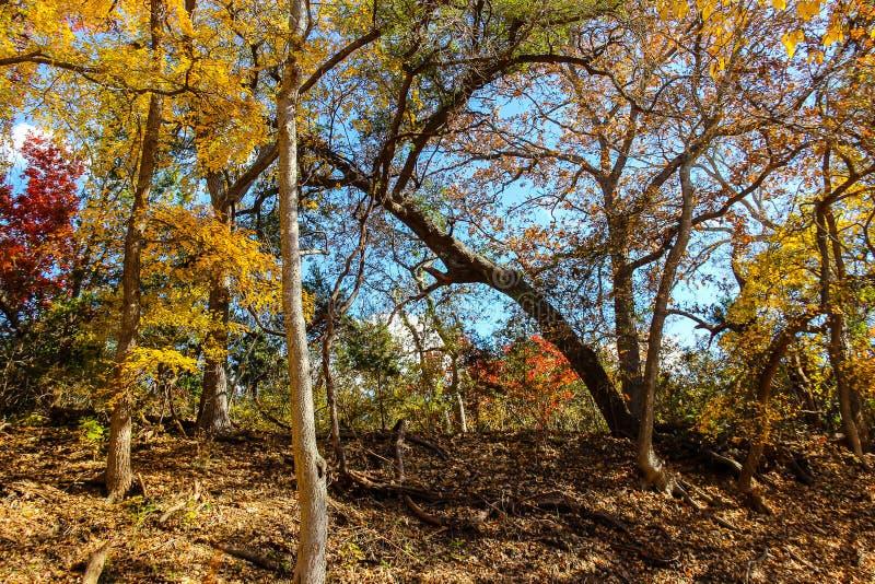 在圣基布里埃尔河的秋叶 免版税图库摄影