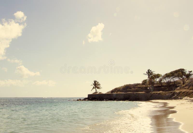 在圣基茨希尔的海扇壳海滩 库存照片