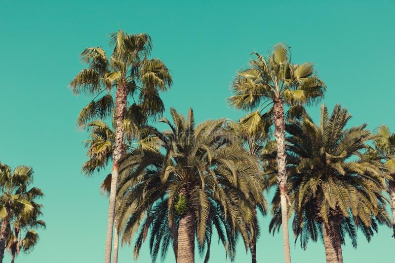 在圣塔蒙尼卡海滩的棕榈树 库存照片