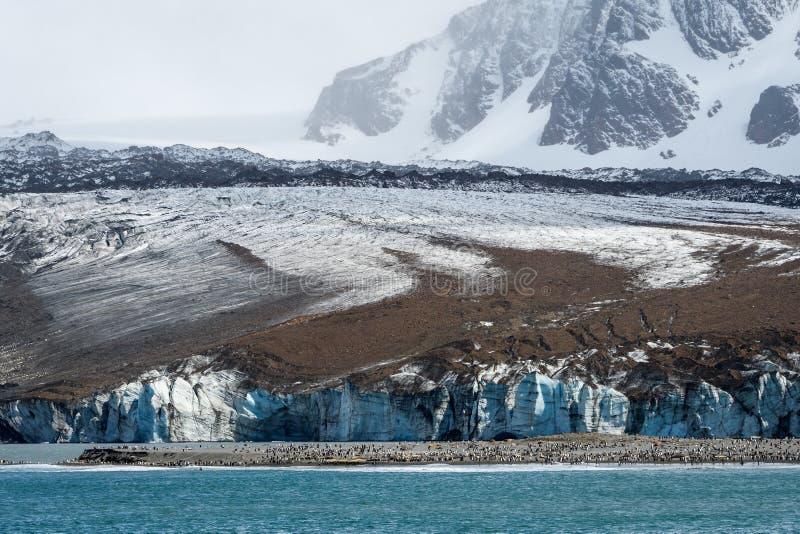 在圣安德鲁斯海湾的冰川与海滩的大企鹅国王殖民地,南乔治亚,大西洋南部 图库摄影