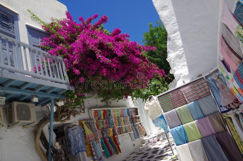 在圣托里尼,希腊开花九重葛 库存图片