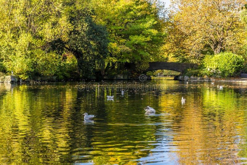 在圣斯蒂芬` s绿园,都伯林,爱尔兰的一明亮的秋天天 免版税图库摄影