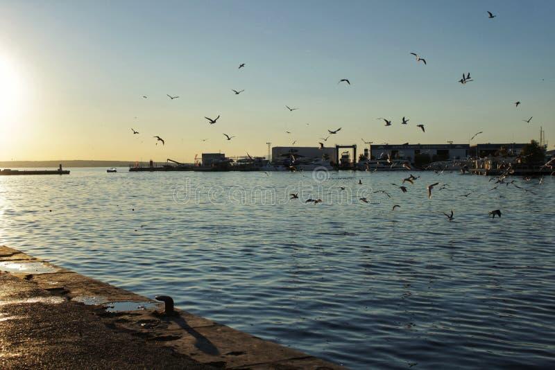 在圣波拉,阿利坎特港的海鸥  西班牙 库存照片