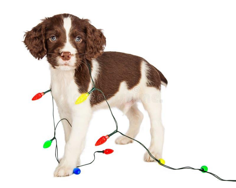 在圣诞灯包裹的小狗 免版税图库摄影