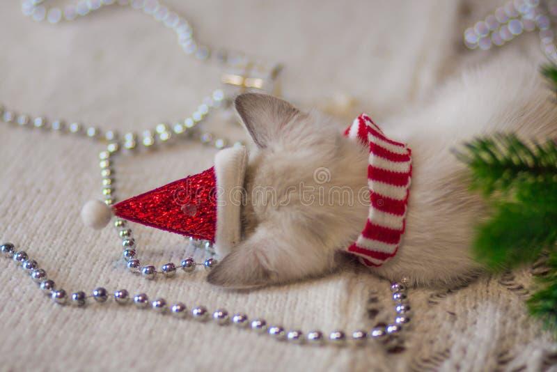 在圣诞老人帽子的圣诞节猫 小猫去睡 库存图片