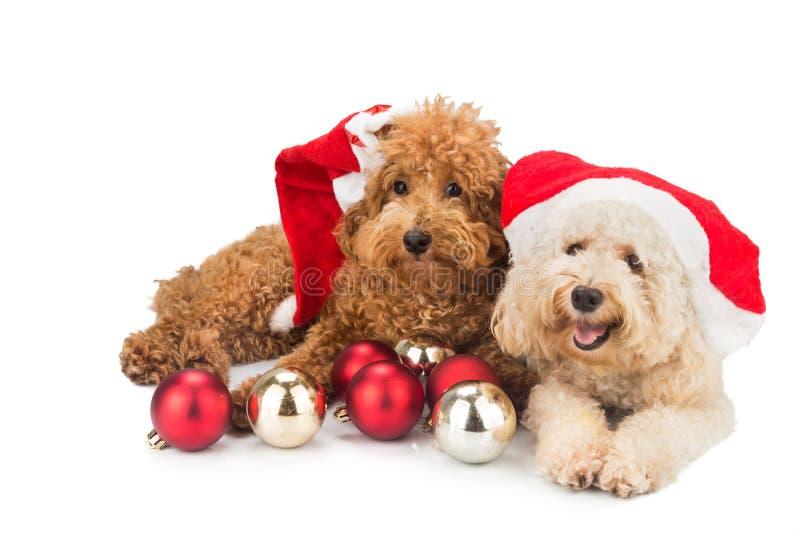在圣诞老人服装的两只逗人喜爱的长卷毛狗小狗有圣诞节装饰品的 免版税库存图片