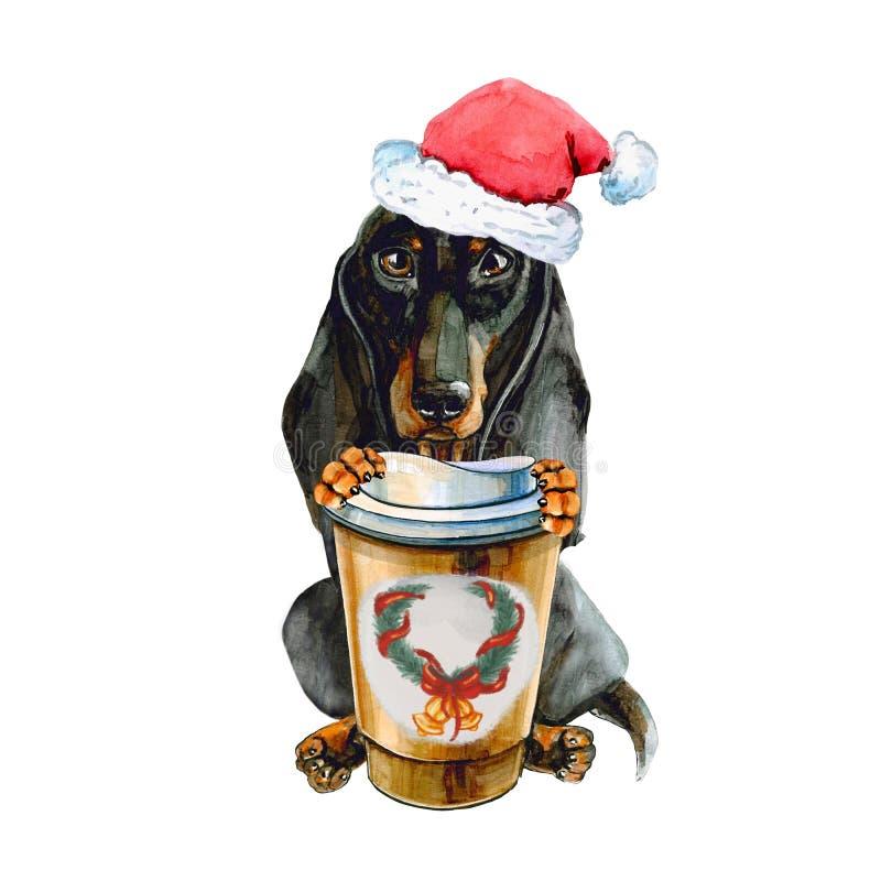 在圣诞老人项目圣诞节帽子的达克斯猎犬狗,有一杯温暖的咖啡的 背景查出的白色 皇族释放例证