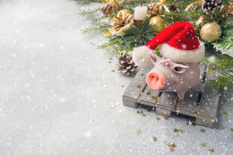 在圣诞老人项目帽子的图猪在圣诞树背景  圣诞节装饰生态学木 概念新年度 库存图片