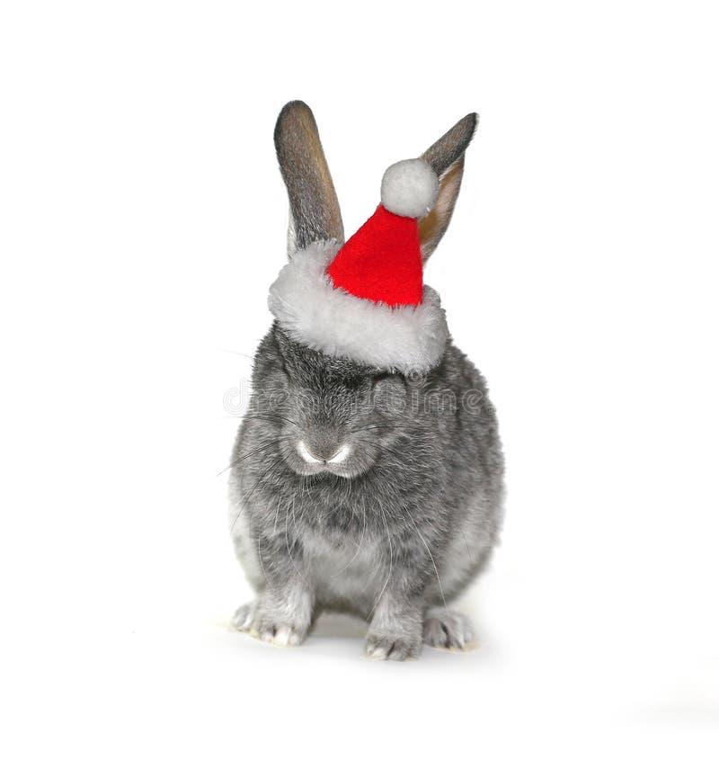 在圣诞老人项目帽子的圣诞节兔子  免版税库存图片