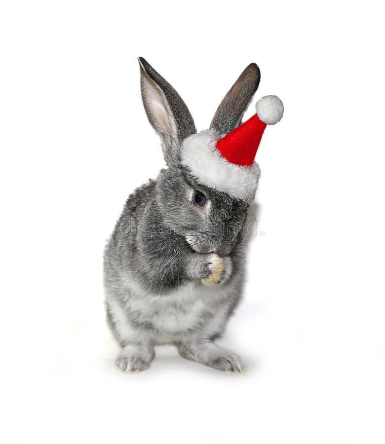 在圣诞老人项目帽子的圣诞节兔子  库存图片