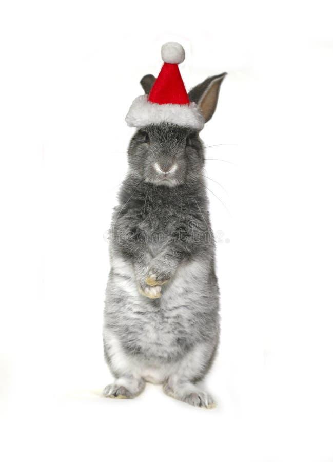 在圣诞老人项目帽子的圣诞节兔子  免版税库存照片