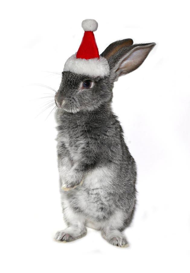 在圣诞老人项目帽子的圣诞节兔子  库存照片
