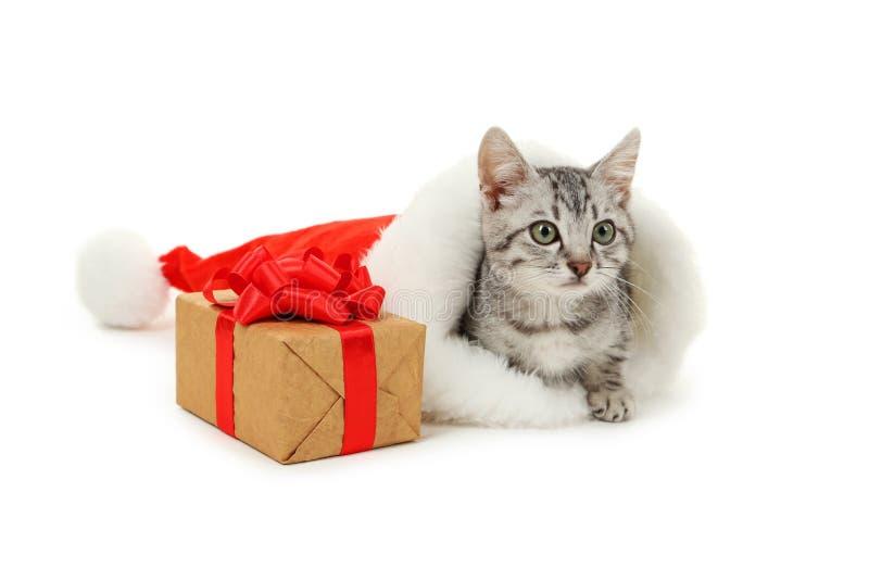 在圣诞节帽子的美丽的猫有在白色背景隔绝的礼物盒的 免版税库存图片
