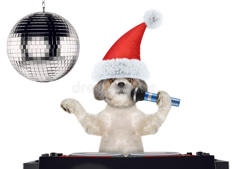 在圣诞节帽子的Shitzu狗唱与话筒卡拉OK演唱歌曲的 查出在白色 库存照片