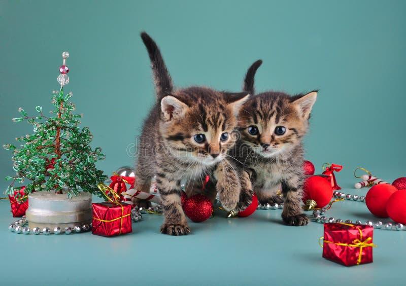 在圣诞节材料中的小小猫 库存照片