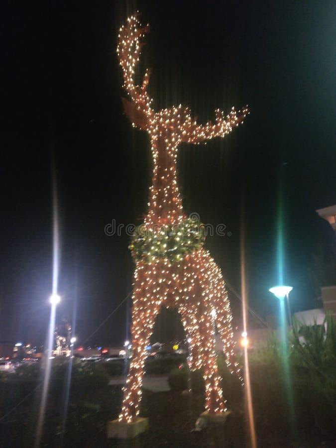 在圣诞节的鹿 免版税库存照片