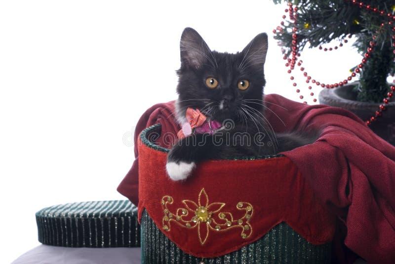在圣诞节礼物盒的黑色小猫在白色 免版税图库摄影