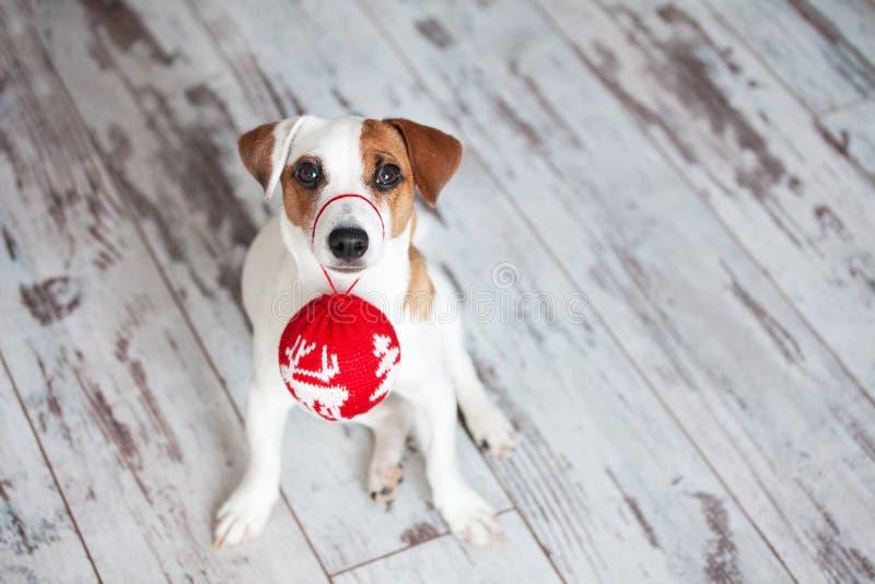 在圣诞节装饰的狗 免版税库存图片