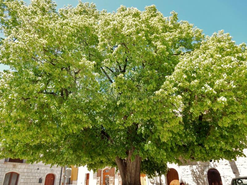 在圣费利切的二百年吠声 图库摄影