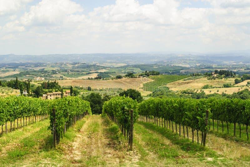 在圣Gimignano (锡耶纳,托斯卡纳)附近的葡萄园 库存照片