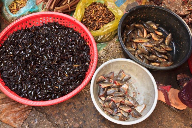 在地方市场上的油煎的昆虫甲虫在柬埔寨 库存照片