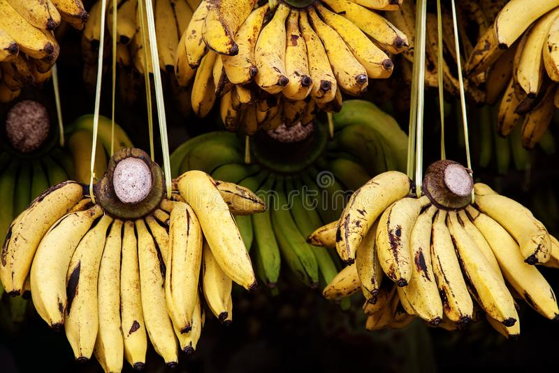 在地方市场上的黄色香蕉 大蕉或烹调香蕉出售的 成熟未加工的香蕉束在阳光下 库存照片