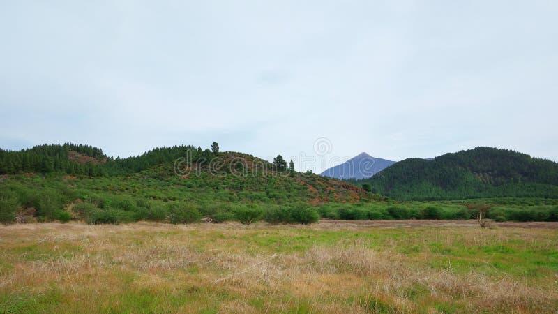 在地方植物群报道的典型的火山的风景用皮库岛del泰德峰在背景中,特内里费岛,加那利群岛,西班牙 库存图片