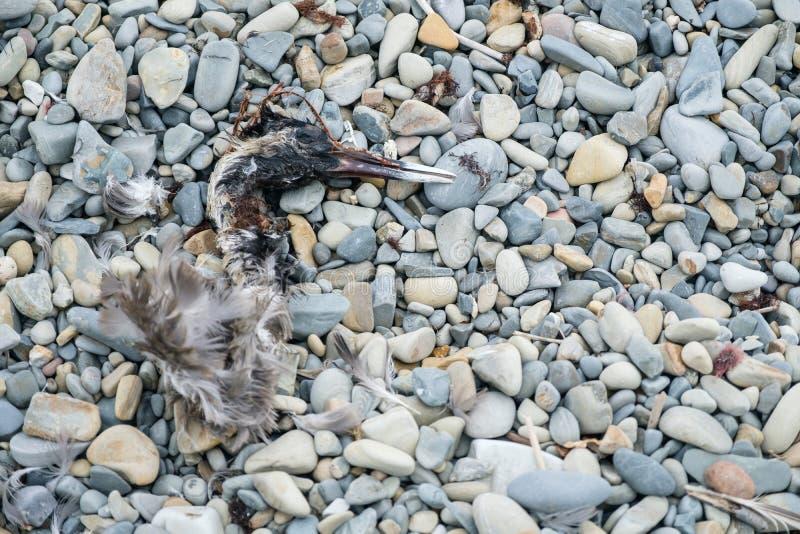 在地板上的鸟骨骼 库存照片