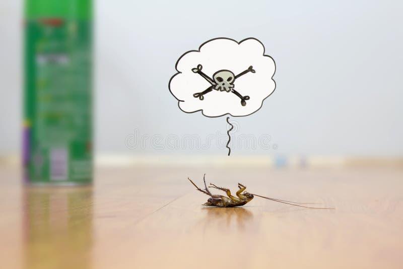在地板,害虫控制概念上的死的蟑螂 库存照片