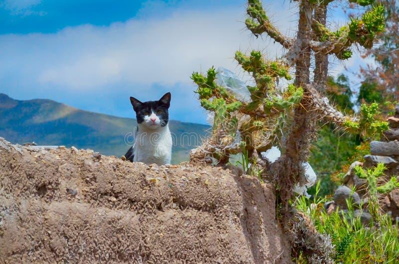 在地球墙壁上的猫 库存照片