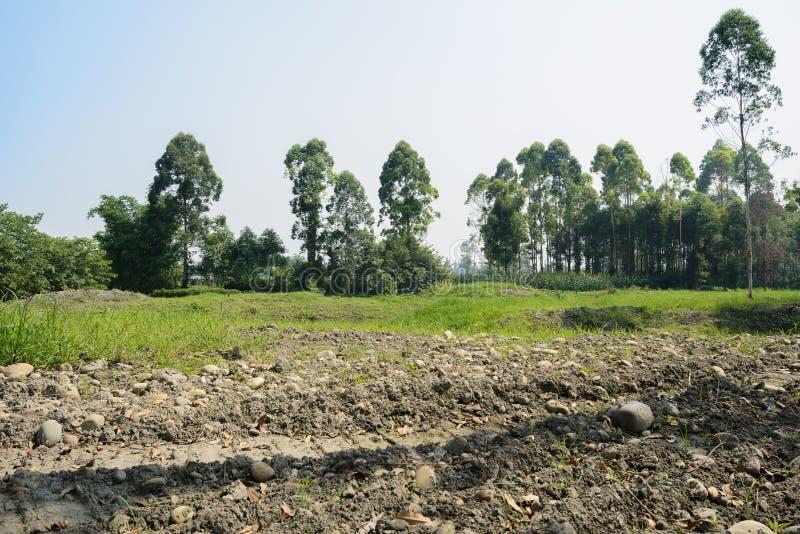 在地球的推土机车轮痕迹与杂草和树在太阳的背景中 免版税库存照片