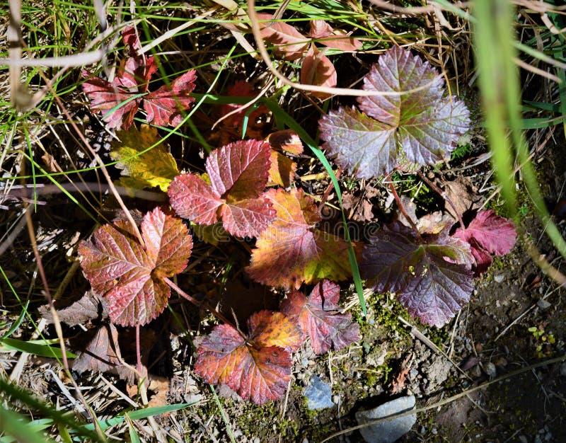 在地被植物的叶子 库存图片