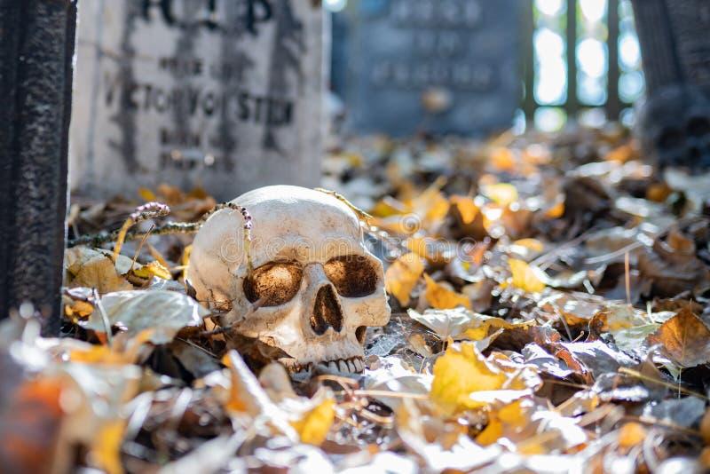 在地面上的假头骨 图库摄影