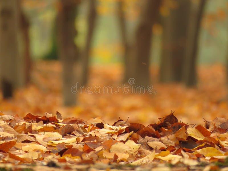 在地面上的叶子在秋天 免版税库存图片