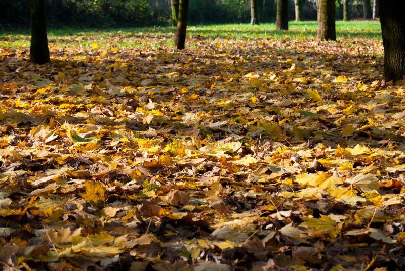 在地面上的叶子秋天在秋天期间 库存图片