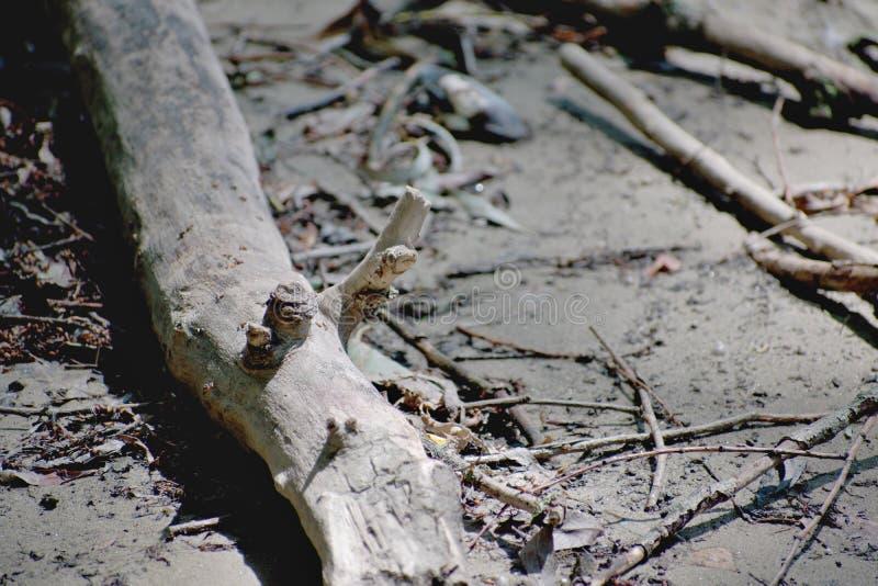 在地面上的尾巴 免版税图库摄影