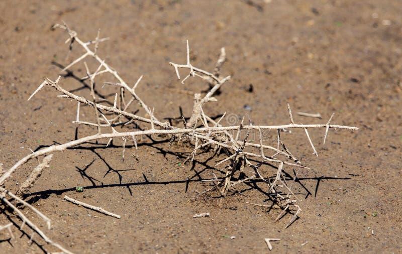 在地面上的干燥棘手的植物作为背景 库存图片
