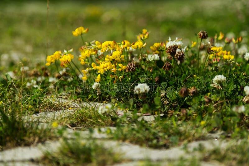 在地面上的微小的花 图库摄影