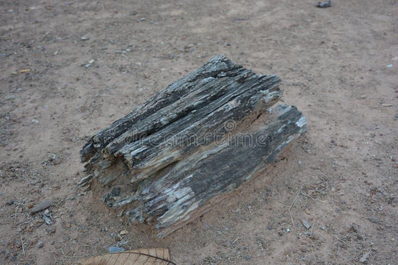 在地面上的木朽烂 免版税库存照片