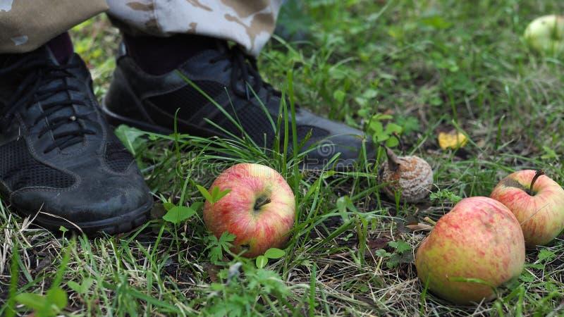 在地面上的未成熟和腐烂的下落的苹果在人脚旁边的一个庭院里 免版税库存图片