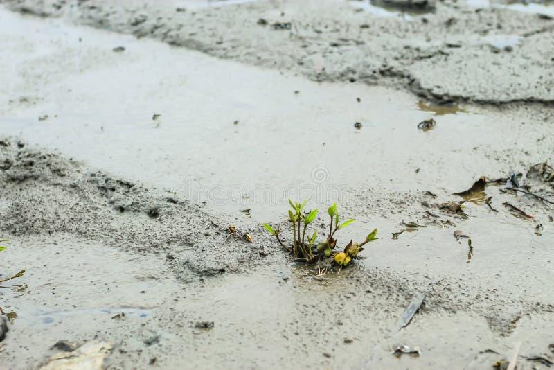 在地面上的树对泥 库存照片