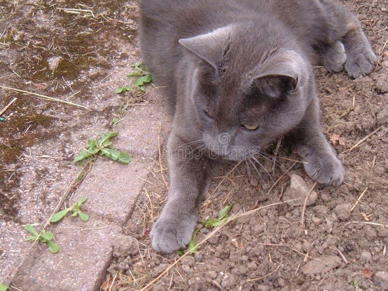 在地面上的猫 库存图片