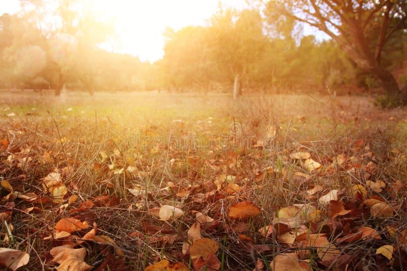 在地面上的秋叶 秋天墙纸 被定调子的图象 图库摄影