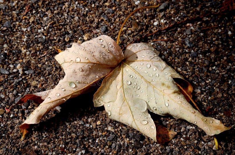 在地面上的秋天叶子 图库摄影