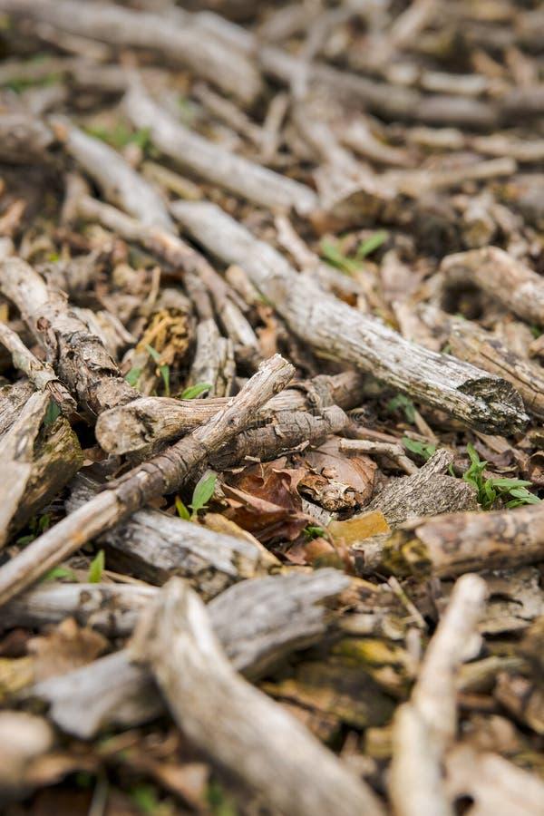 在地面上的死的木头 库存照片