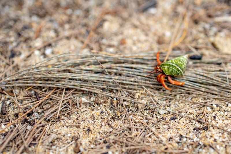 在地面沙子的寄居蟹运动 图库摄影